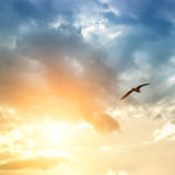 Bird And Dramatic Clouds Royalty Free Stock Photo