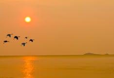 Free Bird And The Sunset Stock Photo - 24216360