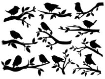 Free Bird And Twig Silhouettes. Cute Birds And On Branch, Romantic Spring Image, Black Sparrows On Tree, Garden Decor Retro Stock Photography - 193368242
