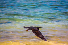 Bird Andaman Sea. Royalty Free Stock Photo