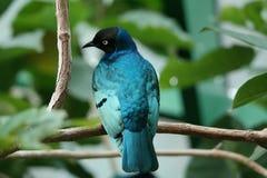 Bird, Animal, Nature, Colorful Stock Photos
