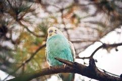 Bird animal Royalty Free Stock Photo