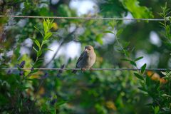 Sparrow on the sail royalty free stock images