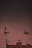Bird on the antenna Royalty Free Stock Photo