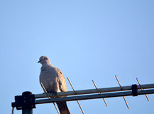 Bird on antenna Stock Photo