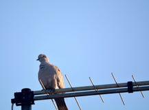 Bird on antenna Stock Photo