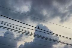 A bird on antenna wires with clouds behind Royalty Free Stock Images