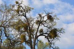 Bird Aparments. Dove in Nests, Paicines, California Royalty Free Stock Images