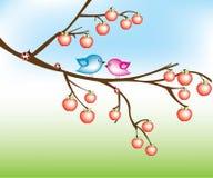 Bird on apple tree Stock Photography