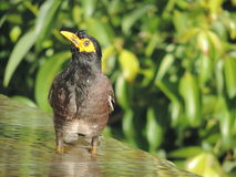 Bird and Aqua Stock Photo