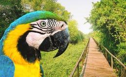 Bird Arara Caninde at the green vegetation of a tourist destination at Pantanal. Eco tour, tourism at Brazilian Pantanal stock image