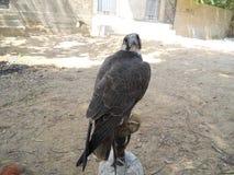 Bird stock photography