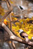 Bird in autumn Royalty Free Stock Photos