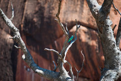 Bird on Ayers Rock Stock Image