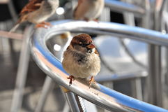 Bird on a back rest in St. Mark's Square, Venice Royalty Free Stock Photo