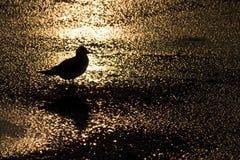Bird backlit Stock Photos