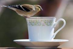 Bird Balancing Act Royalty Free Stock Images