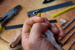 Bird Banding Stock Images