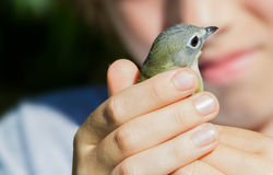 Bird banding Royalty Free Stock Photos