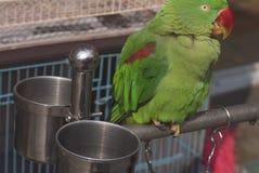Bird on the bar. A parrot  on the bar Royalty Free Stock Photos