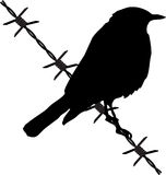 Bird on the barbed wire Royalty Free Stock Photography