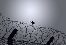 Bird on barbed wire. Bird sitting on barbed wire ready to fly stock photography