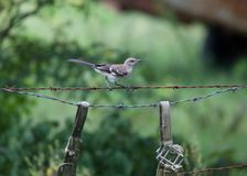 Bird on a barbed wire fence. Stock Images