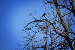 Bird on Bare Branches Stock Photos