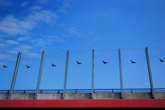 Bird barrier Royalty Free Stock Photography