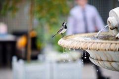 Bird. On the basin of the fountain Stock Photos