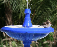 Bird Bath 3. Blue bird bath in Moroccan garden Stock Photo