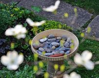 A bird bath with dogwood flowers. A bird bath filled with rocks and water seen surrounded by blurred dogwood flowers Royalty Free Stock Photos