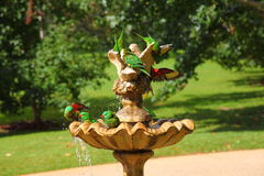 Scaly-breasted Lorikeet birds splashing. Australian wildlife with its colorful birds having a bath in a tiered water fountain in a park of Queensland Royalty Free Stock Image