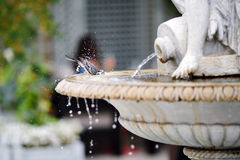 Bird. Bathes in the basin of the fountain Royalty Free Stock Photo