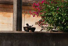 Bird bathes in plate on the old fence Royalty Free Stock Image