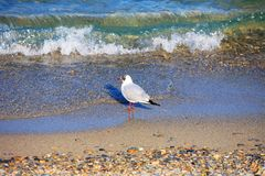 Bird on beach Stock Images