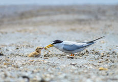 Bird on beach. Royalty Free Stock Image