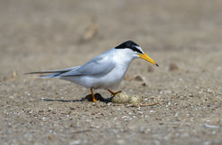 Bird on beach. Royalty Free Stock Photos