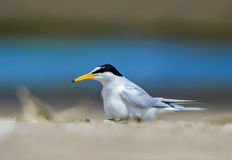 Bird on beach. Stock Image