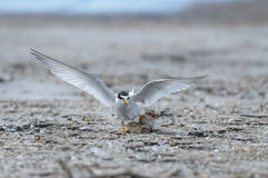Bird on beach. Stock Photo