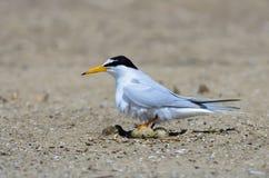 Bird on beach. Stock Photography