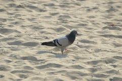 Bird on the beach. A bird on the beach Stock Image