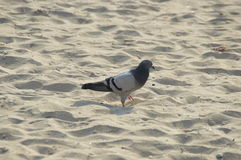 Bird on the beach Stock Image