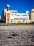 Atlantic City, NJ Stock Images