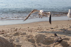 Bird on the beach royalty free stock photography