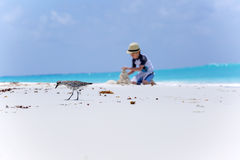 Bird on the beach and boy making sand castles Stock Images