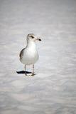 Bird on the Beach Stock Photo