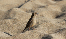 Bird on Beach Royalty Free Stock Photography