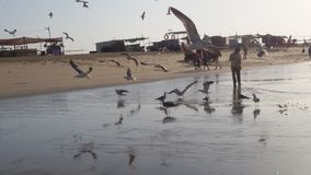Bird Beach Stock Images