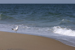Bird beach sand Royalty Free Stock Image